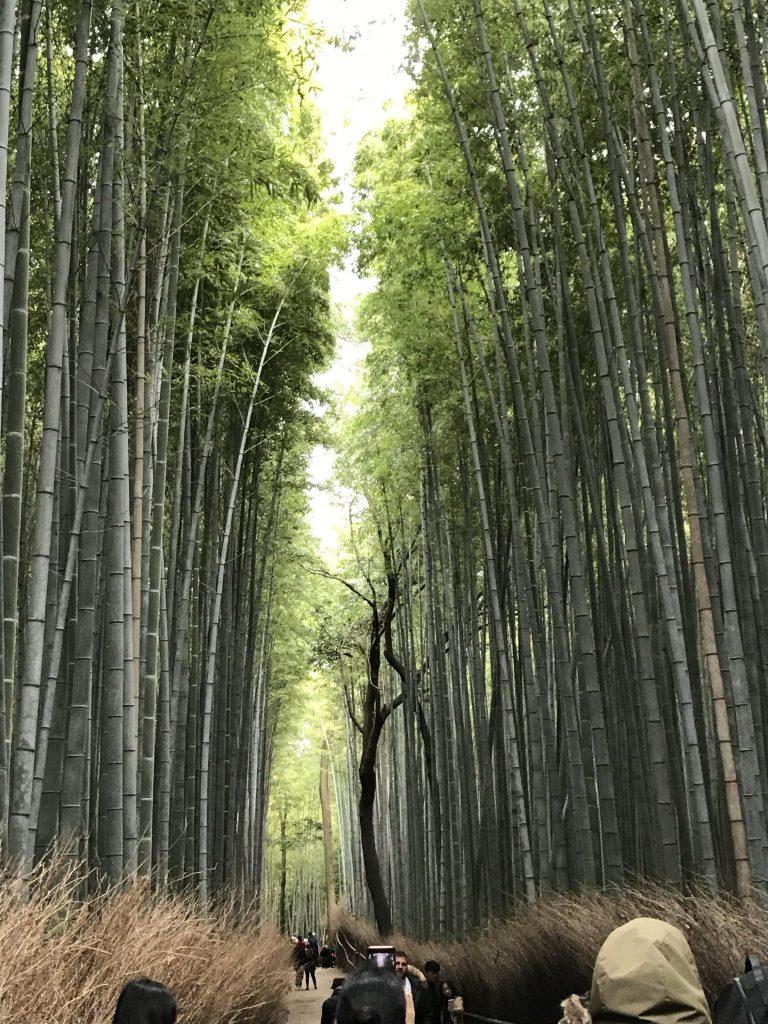 Japan 2019/2020 – Day 1- 3