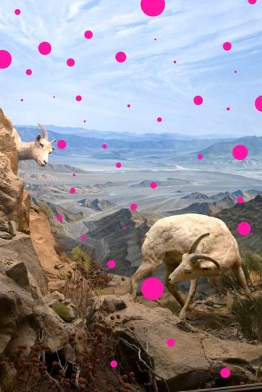 Jason DeMarte, Pink Placebo