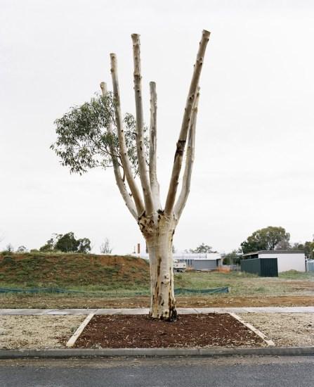 Amy Stein, Cut Down Tree III
