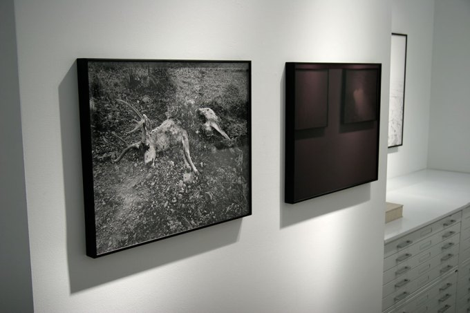 Michael Lundgren, Transfiguration Installation 2