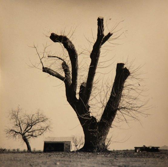 Rick Chapman, Pollard Tree, California