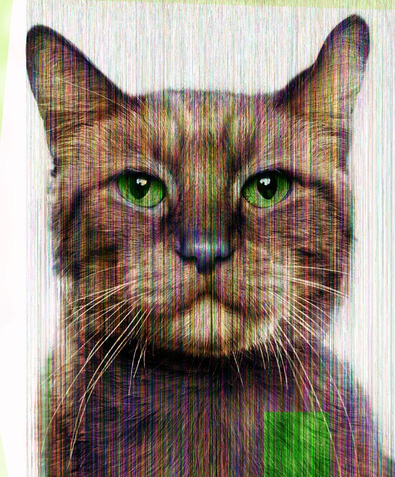 Jill Greenberg, Glitch Cat (Morris)