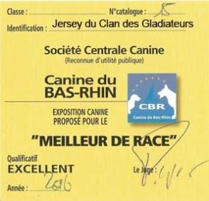 """Carton """"Meilleur de Race"""" pour Jersey du Clan des Gladiateurs lors de l'Exposition Canine Nationale de Strasbourg 2016"""