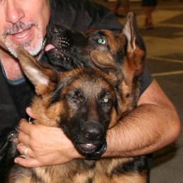 """Deux """"Baby"""" de quatre mois présents à l'Exposition Canine Internationale de Dijon - Septembre 2016"""
