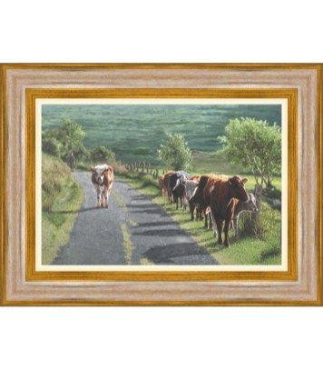 Farmer Cow Picture Belfast