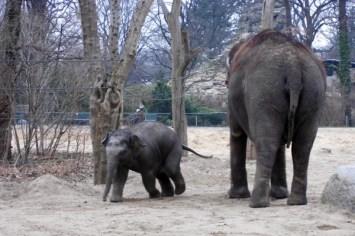 1803 Elefanten 65 600