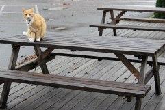 IMG_2316-cat