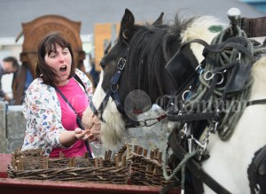 Christina O Dea gets a nip from her horse during the Vintage Rally and field day as part of the annual Festival Of Fun in Kilmihil. Photograph by John Kelly
