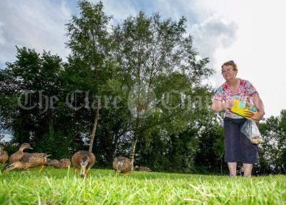 020819 Margaret Furlong, Tuamgraney, feeding the ducks at Reddans Quay, Tuamgraney on Friday evening.pic Arthur Ellis.