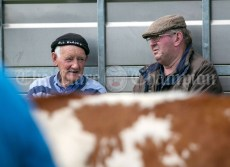 310819 Gerry Donnelly, Lissycasey and Pa Vaughan, Bridgetown, at Clarecastle Show on Saturday.Pic Arthur Ellis.