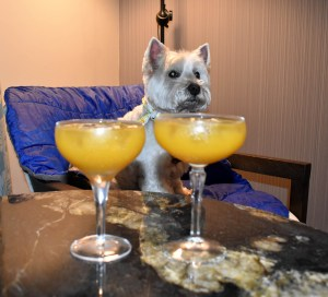 Daisy really fancied the cocktails