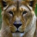 Lions rock Sanctuary
