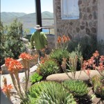 Clarens Tours to Lesotho - Botanical Gardens