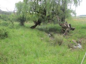 Ash river upstream