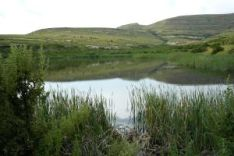 Clarens Village Nature Reserve