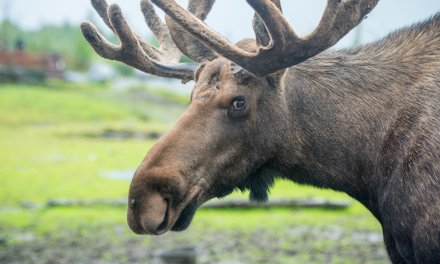 Man on a mission to send a message to Washington, DC, proves you can bring moose poop through TSA checkpoints