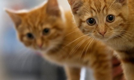New York — which passed one of the most liberal abortion laws ever — now wants to protect cats from a 'horrific' procedure