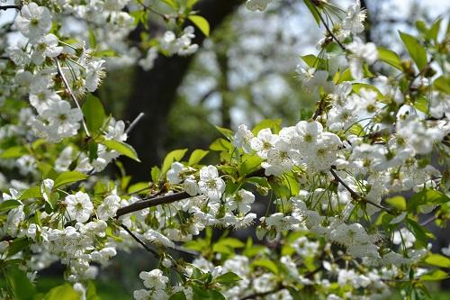 May in Polish countryside