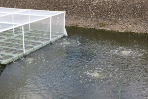 Water Treatment Aeration