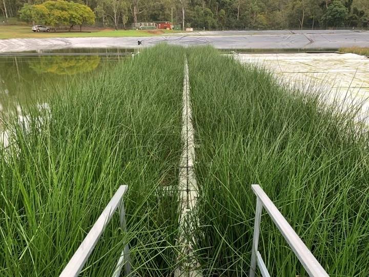 Constructed Floating Wetlands Kenilworth, Queensland