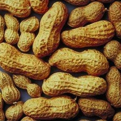 Price of peanuts to crawl back after hefty rise