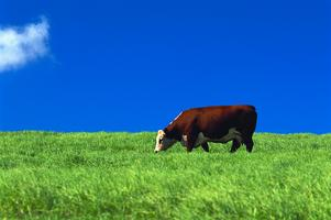 Organic milk may be more costly, but it lasts longer