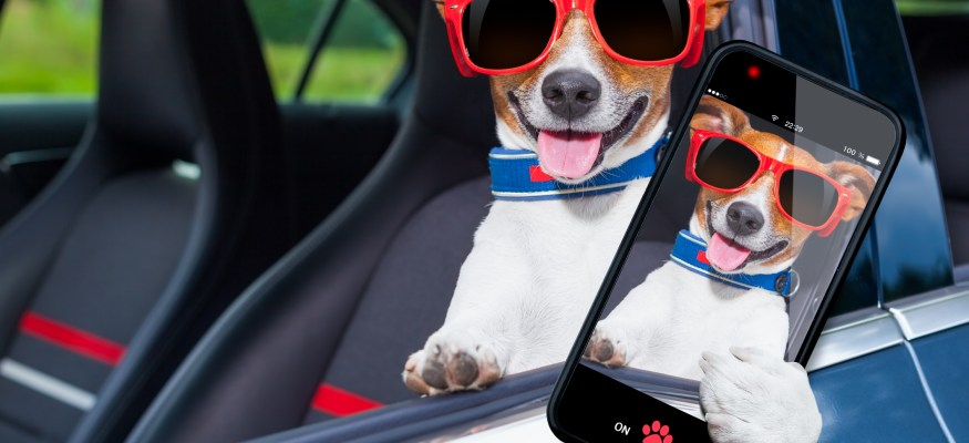 Don't Take Selfies With Your Pet While Driving, AAA Warns