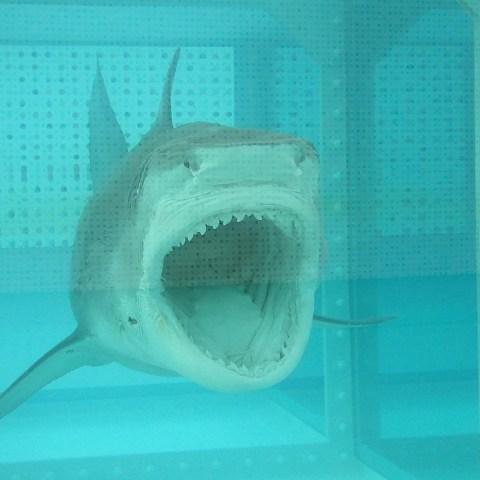 8 ways to avoid sharks at the beach