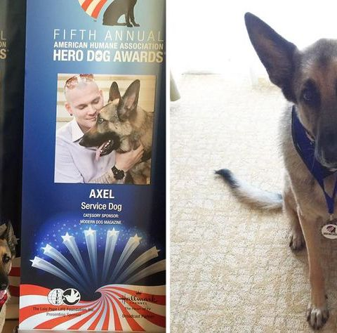American Airlines stops Marine vet, service dog from boarding flight