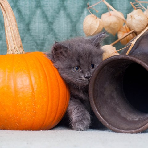 How to keep your pets safe this Halloween!