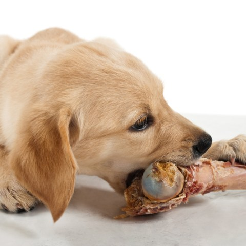 9 foods your pets should never eat