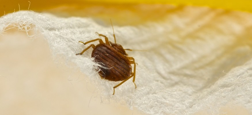 Follow these 5 steps to prevent a hotel bed bug attack