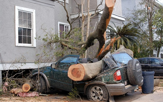 Vehicle destroyed by fallen tree