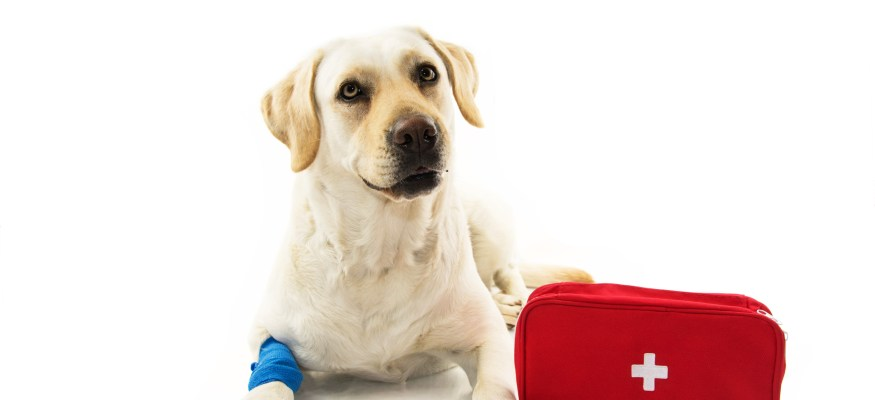 Pet dog with first aid kit
