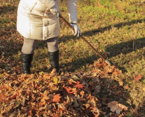 Homeowner raking leaves to clean up her home.