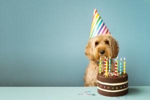 Happy birthday to that dog