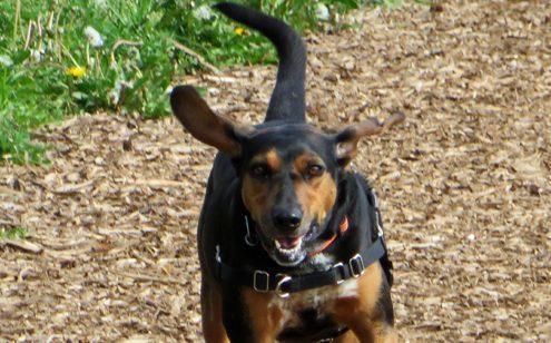 dog park clark county