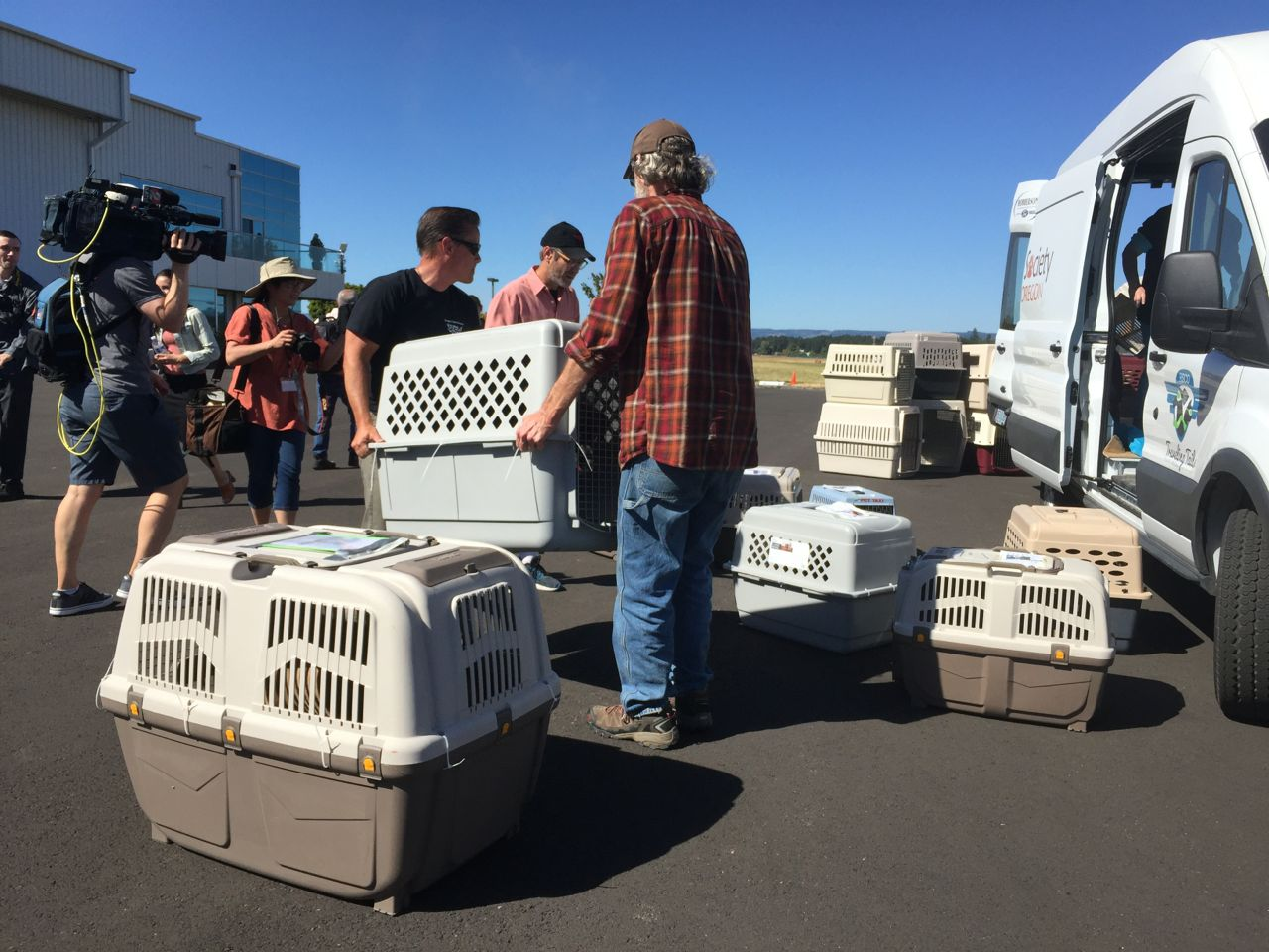 adopt dog vancouver Ten shelter dogs from Texas arrived courtesy ...