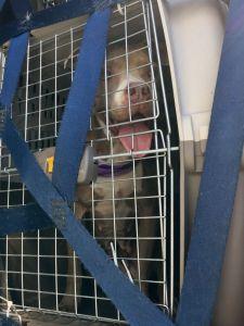 adopt dog vancouver
