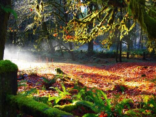 Quinault Rainforest Fall Colors
