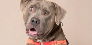 Humane Society for Southwest Washington Pet of the Week Taz