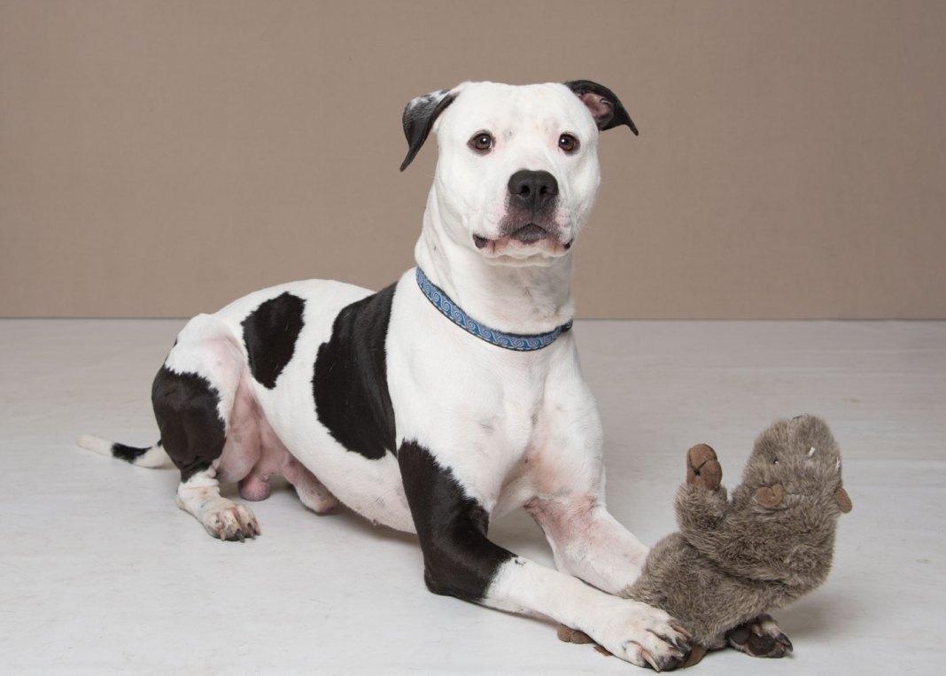 Humane Society for Southwest Washington pet of the week