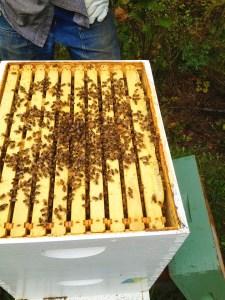 Half Moon Farm Bees