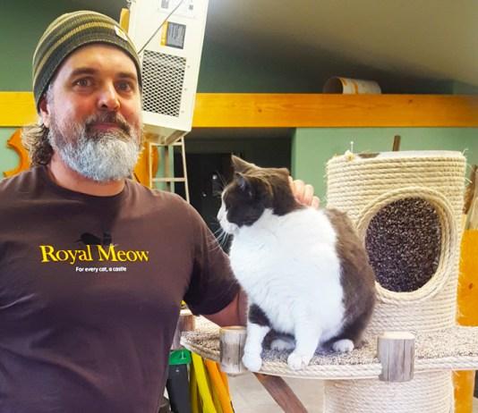 Royal Meow Cat Castle Mark Hircock Close Up