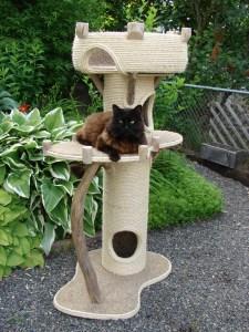 Royal Meow Cat Castle Outside