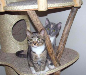 Royal Meow Cat Castle Two Kitties