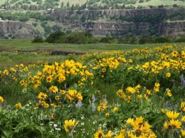 wildflower viewing in Clark County