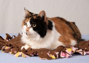 Humane Society for Southwest Washington Pets of the Week Maggie