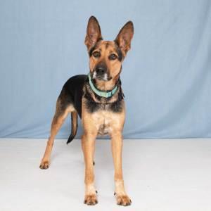 Humane Society for Southwest Washington Pets of the Week Breena