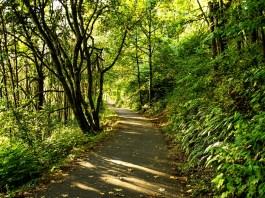 Winter walks in vancouver Burnt Bridge Creek Trail Vancouver WA